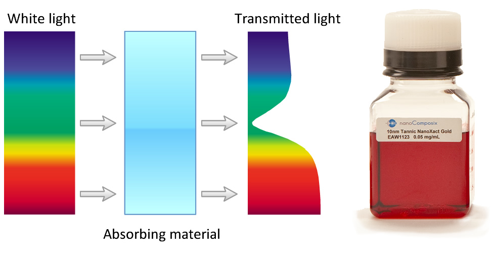 Figure 4: Schematic of white light interacting with small gold particles (left).  Note that for particles with the absorption spectrum displayed in Figure 3, red light is transmitted and seen by the observer.  This causes small gold nanoparticles to appear red (right).