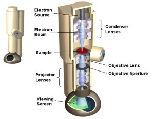 Schematic of a transmission electron microscope.